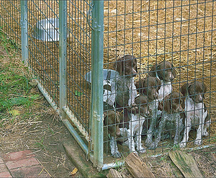 kennel_pups_1_a