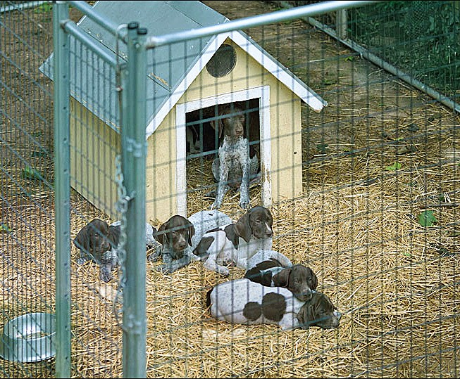 kennel_pups_2_a